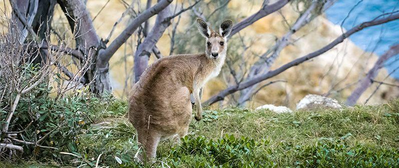 australia_img